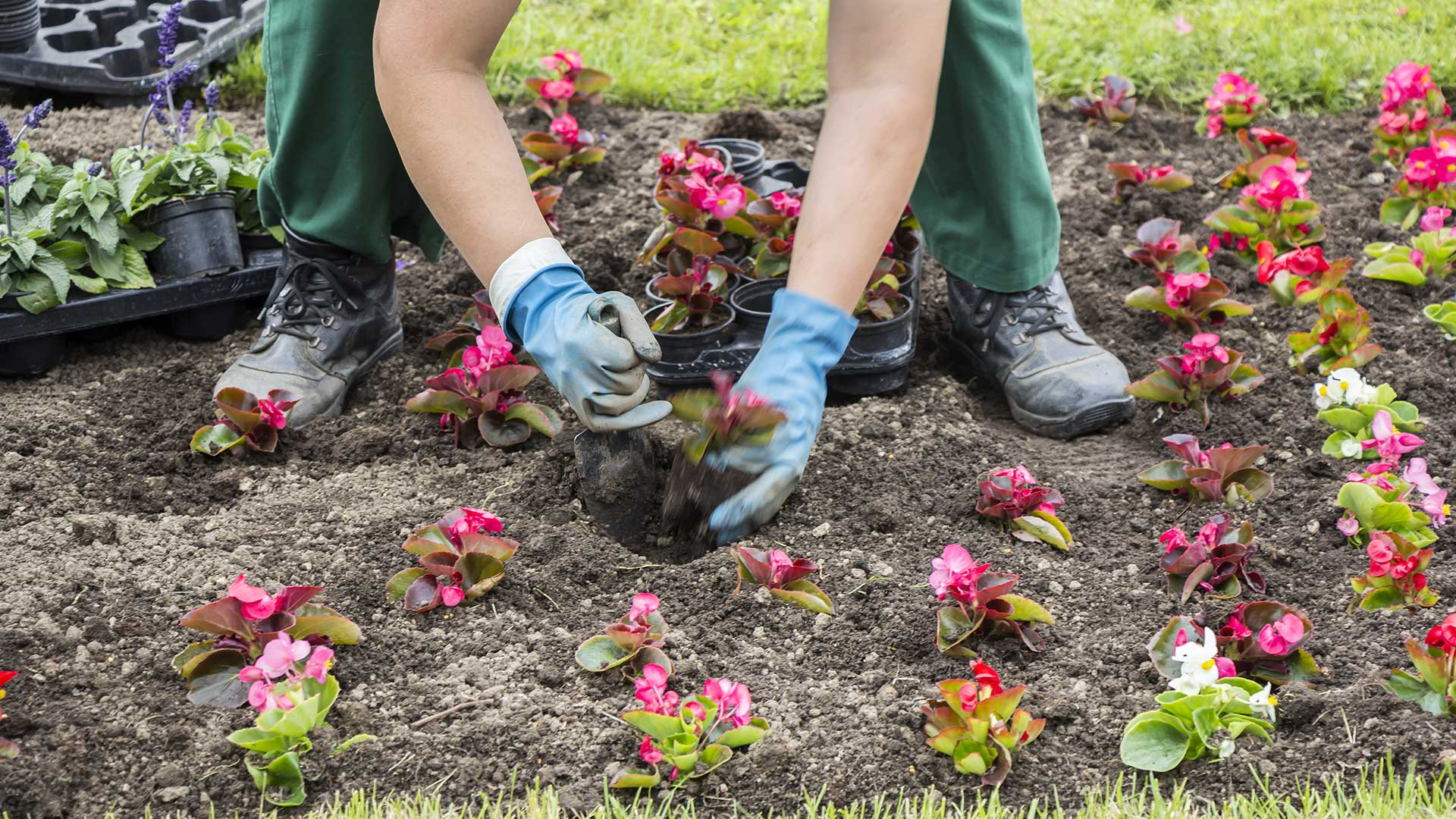 Planting annuals in a yard in Bowling Green, KY.