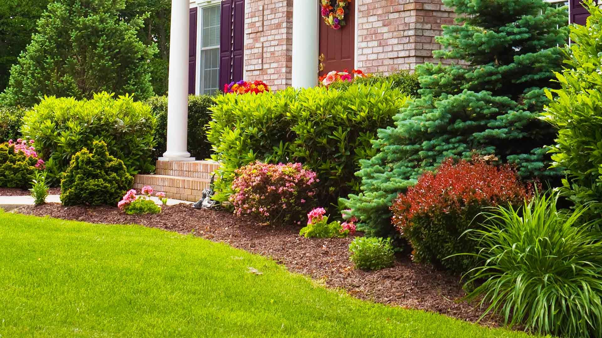 Front yard that is receiving scheduled, full-service lawn and landscape maintenance.