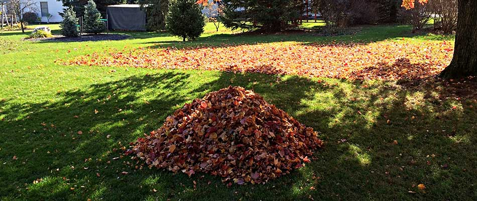 Reasons to Do a Property Cleanup in Fall