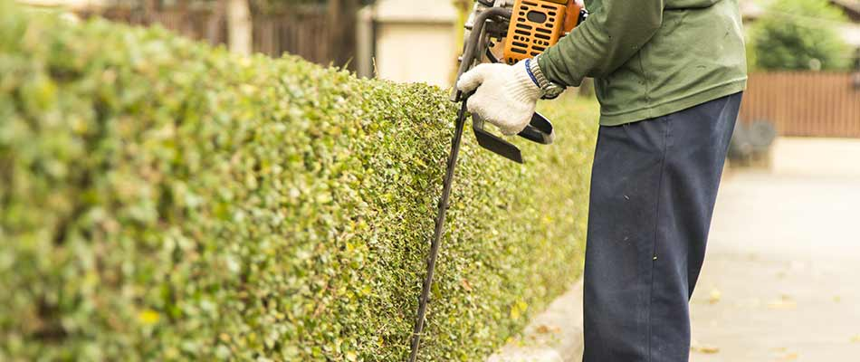3 Ways We Promote the Health of Your Hedges in Bowling Green