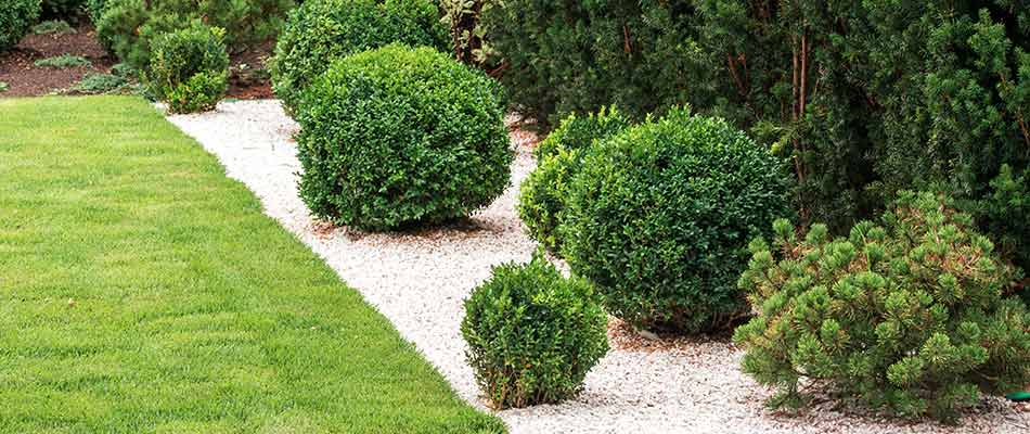 Well-trimmed hedges in the backyard of a Spring View Lawns customer in Bowling Green.