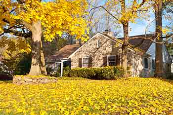 Homeowner's property in Plum Springs in need of leaf removal services.